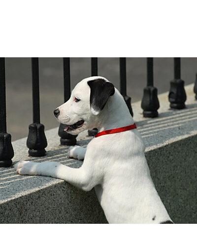 Katrina Dog at the White House